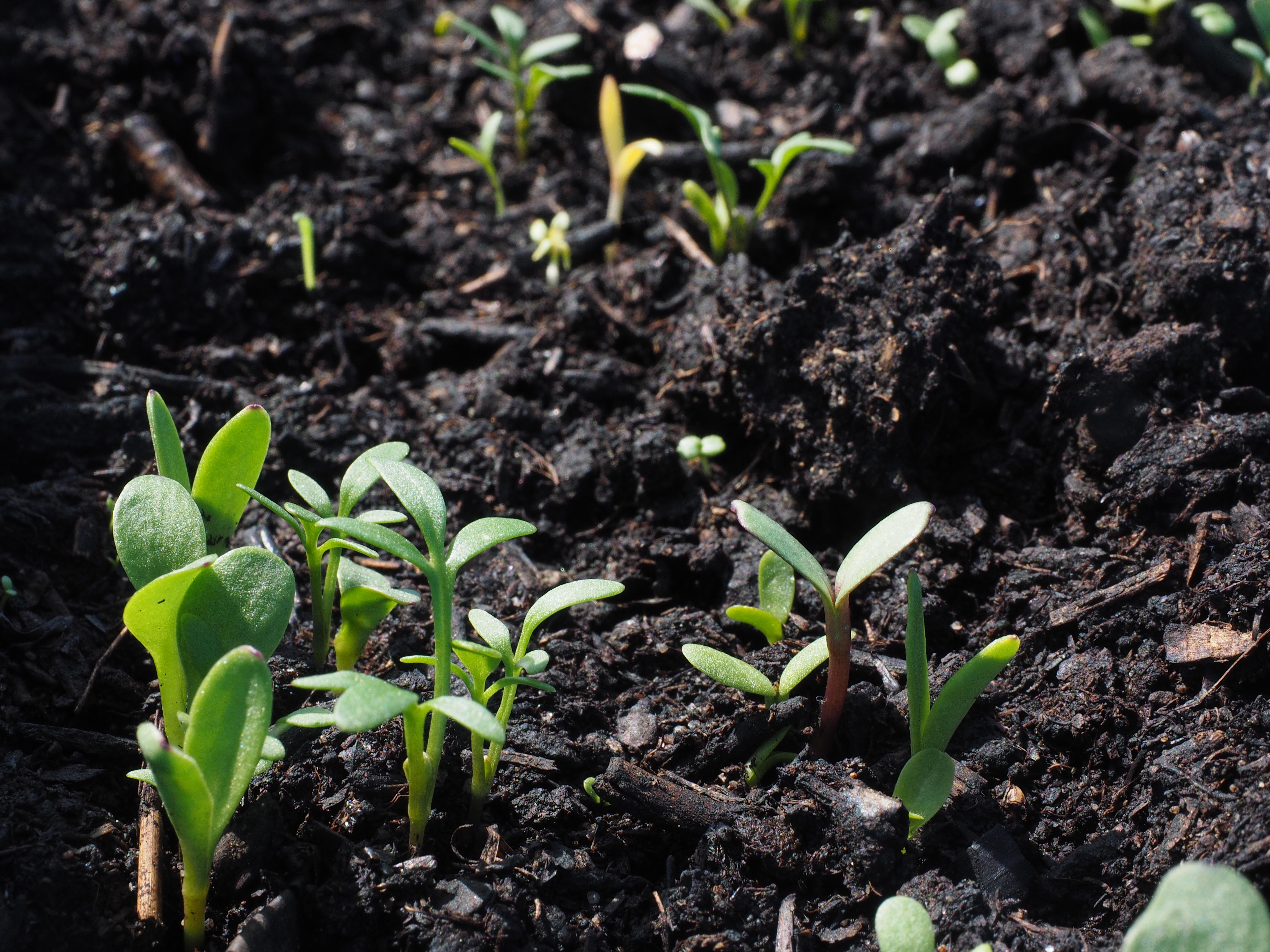 土壤污染不可忽視 監測儀器為環境健康把脈